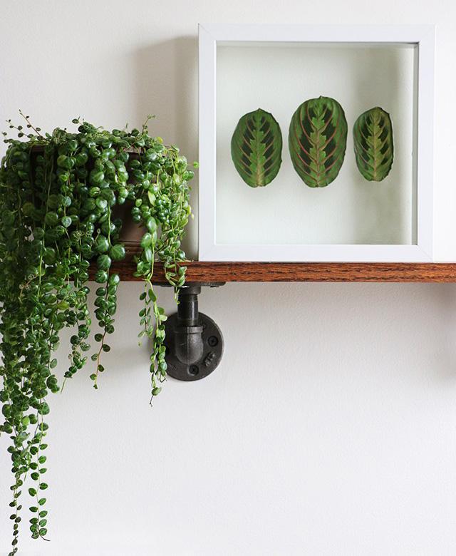 Encadrer feuilles vertes