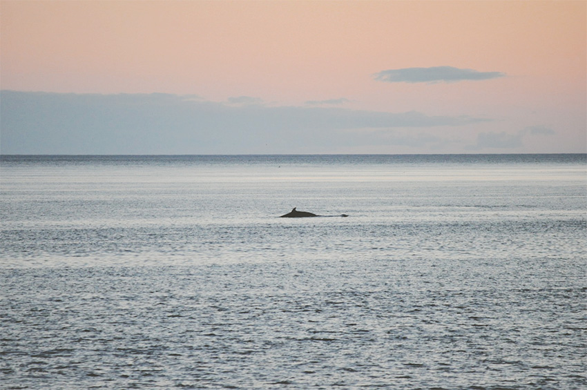 Observation baleines Québec